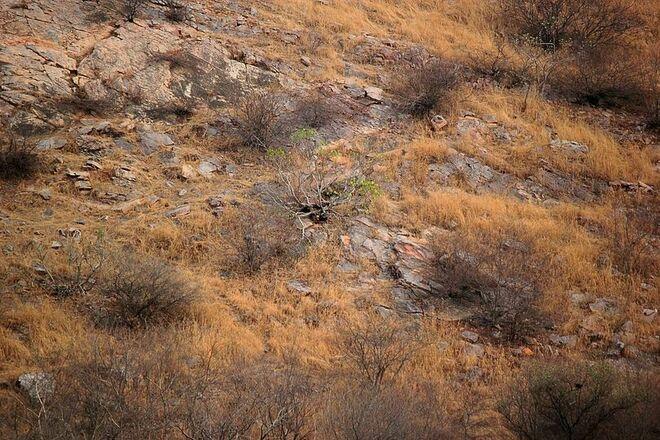 Un fotografo immortala un leopardo perfettamente mimetizzato tra il paesaggio e il Web si impegna a individuarlo