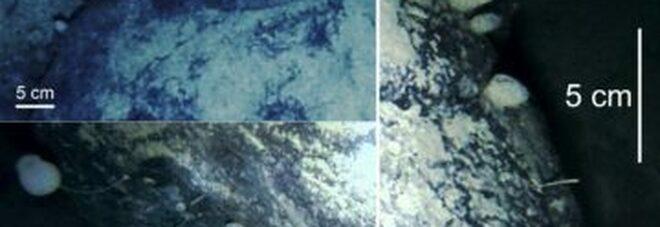 Antartide, trovate forme di vita mai viste prima 900 metri sotto la calotta di ghiaccio