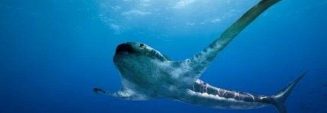 Squalo-aquila, scoperto fossile della misteriosa specie che nuotava 93 milioni di anni fa
