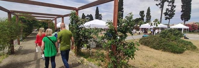 Parco Archeologico di Ercolano, in crescita il numero dei visitatori