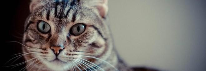 Gatto entra in classe in una scuola elementare, il bidello lo uccide a bastonate davanti ai bambini