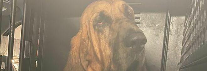 Mercy il cane poliziotto Florida