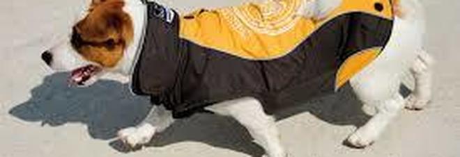 L'ultima frontiera dei pusher: droga nel cappottino del cane e spaccio nell'area animali