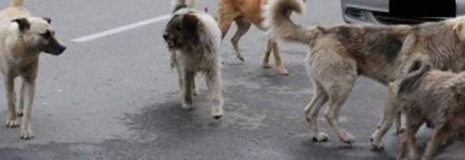In casa con 14 cani e in condizioni igieniche precarie: interviene l'Asl