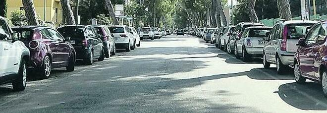 Benevento, scatta l'ora del taglio di 24 pini su viale degli Atlantici
