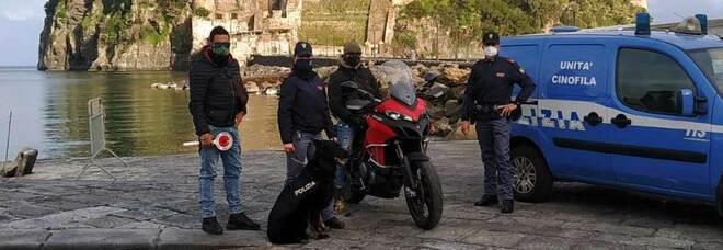 Controlli anti-Covid a Ischia, spacciatore inchiodato dal fiuto del cane Kira