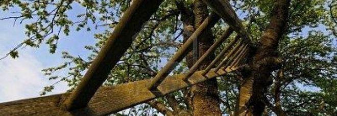 La scala sull'albero a Pian dei Nori: da qui è caduto Gianvittorio Bressan, l'ultimo abitante del paese