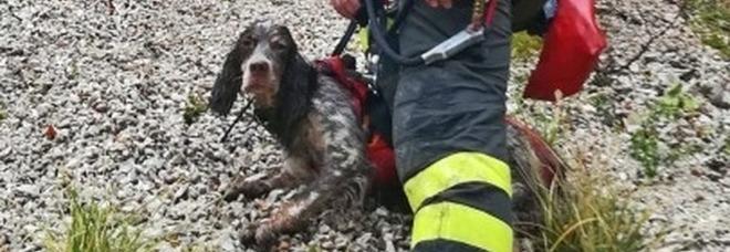 Il cane soccorso e salvato