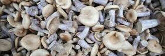 Si inietta un infuso di funghi allucinogeni endovena che hanno cominciato a proliferare nel suo corpo