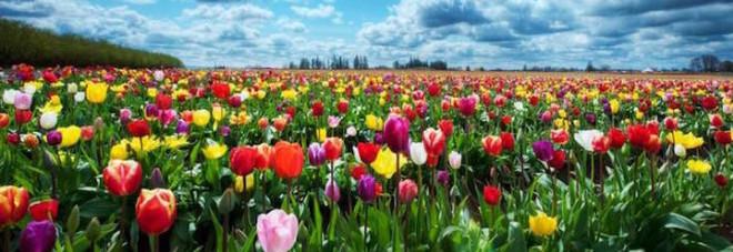 Equinozio di primavera: è oggi alle 11.28. Ma perché non è il 21 marzo?