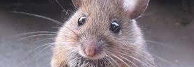Il topo Cenerentola mette in ordine in un vecchio capannone - il Video