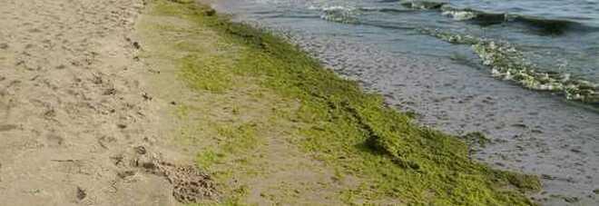 Carta e imballaggi da alghe marine: lo studio per una logistica sostenibile