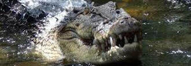 Padre salva la sua bimba dalle fauci di un alligatore