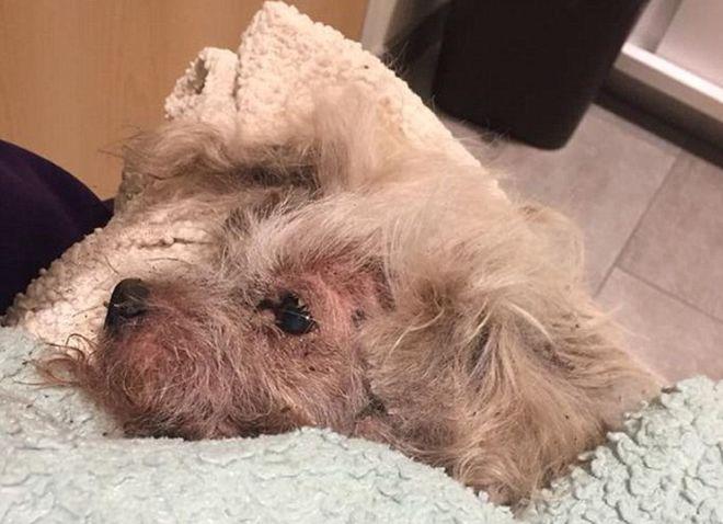 Il suo cane non va d'accordo con il gatto: lo uccide seppellendolo vivo