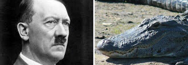 Saturn, l'alligatore di Adolf Hitler, è morto e sarà imbalsamato al Museo di Storia Naturale di Mosca