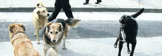 Litorale Domizio, spiagge a rischio per i branchi di cani abbandonati