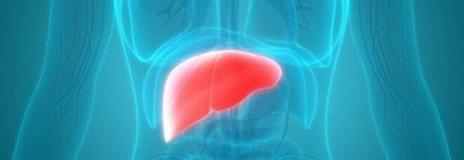 Potenziare ricerca sul fegato, l'accordo tra Italia e Filippine: previsti percorsi formativi a Trieste