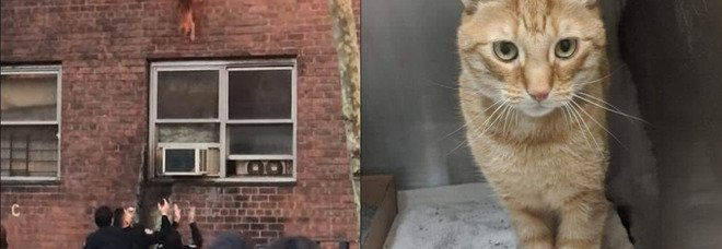 Il gatto scappa dall'appartamento in fiamme con un salto dal secondo piano: il video fa il giro del web