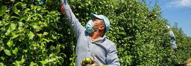 Alimenti, nasce la rete mondiale dei mercati contadini: World Farmers Market Coalition
