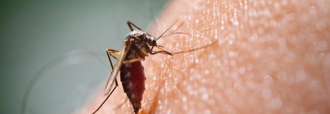 Zanzare, cresce l'allarme per il virus che fa scoppiare il cervello: «Si è esteso»