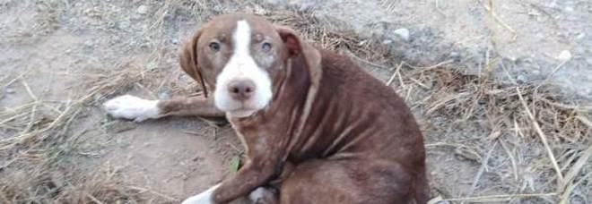 Anziano malato di alzheimer si perde nei boschi, salvato da un cane randagio: sarà adottato