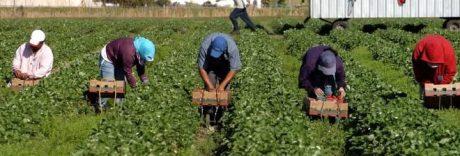 Dodici ore nei campi per 10 euro: sottratti i soldi per piatto lenticchie