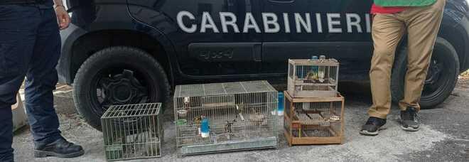 Parco del Vesuvio, possiede uccelli di specie protetta: sequestro e denuncia