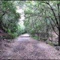 Escursionista si perde nel bosco di Zaro: salva grazie a Whatsapp