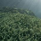 «Così nel Mediterraneo proliferano le macroalghe»