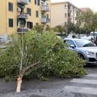 Bufera su Benevento, alberi caduti e danni al Museo del Sannio
