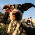 L'Accademia della Crusca ci ripensa: «Non si può dire scendi il cane»