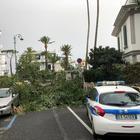 La Campania nella morsa del vento: è strage di alberi, un morto tre feriti