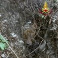 Cane da caccia bloccato in un buco del terreno, in azione i vigili del fuoco: è salvo