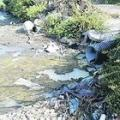 Liquami ed erbacce, la lenta agonia del Fusaro