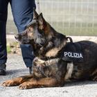 Tossicodipendente scoperto in carcere dai cani poliziotto