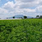 Non facciamo di tutt'erba un fascio: per capirne di più di cannabis light