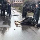 Funerale, nozze e fuochi d'artificio:  cavallo si spaventa, cade e muore