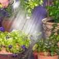 Estate, ecco i trucchi per salvare le piante quando si parte per le ferie