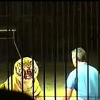 Domatore sbranato da tigri, polizia sequestra animali