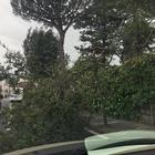 Alberi spezzati dal vento, paura nel centro di Sorrento