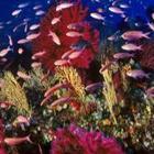 Tutti sub per un giorno nel parco marino di Punta Campanella