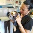 Angel, Leon, Sissy e gli altri: adottati i nove cuccioli gettati nei rifiuti a Napoli