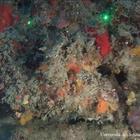 Regno di Nettuno e dei coralli, le prime immagini del robot-sub