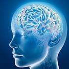 Gli scienziati scoprono come manipolare le cellule cerebrali con uno smartphone