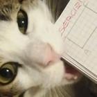 Compiti delle vacanze non fatti, le scuse più assurde degli studenti: altro che «li ha mangiati il gatto»