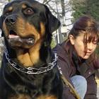 Cani, i padroni sporcaccioni costano 4mila euro al mese