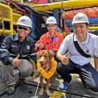 Thailandia, in salvo il cane a 220 km dalla costa
