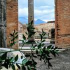 Buon Natale dagli scavi di Pompei: sboccia il raro pungitopo