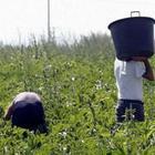 16 lavoratori scoperti in nero nel Casertano: due denunciati