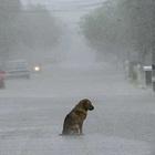 Abbandona il cane, Rocky ritrova la strada di casa: padrone lo fa abbattere dal veterinario